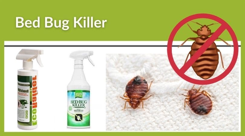Best Spray for Bed Bugs